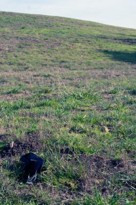 a black plastic bag on grass