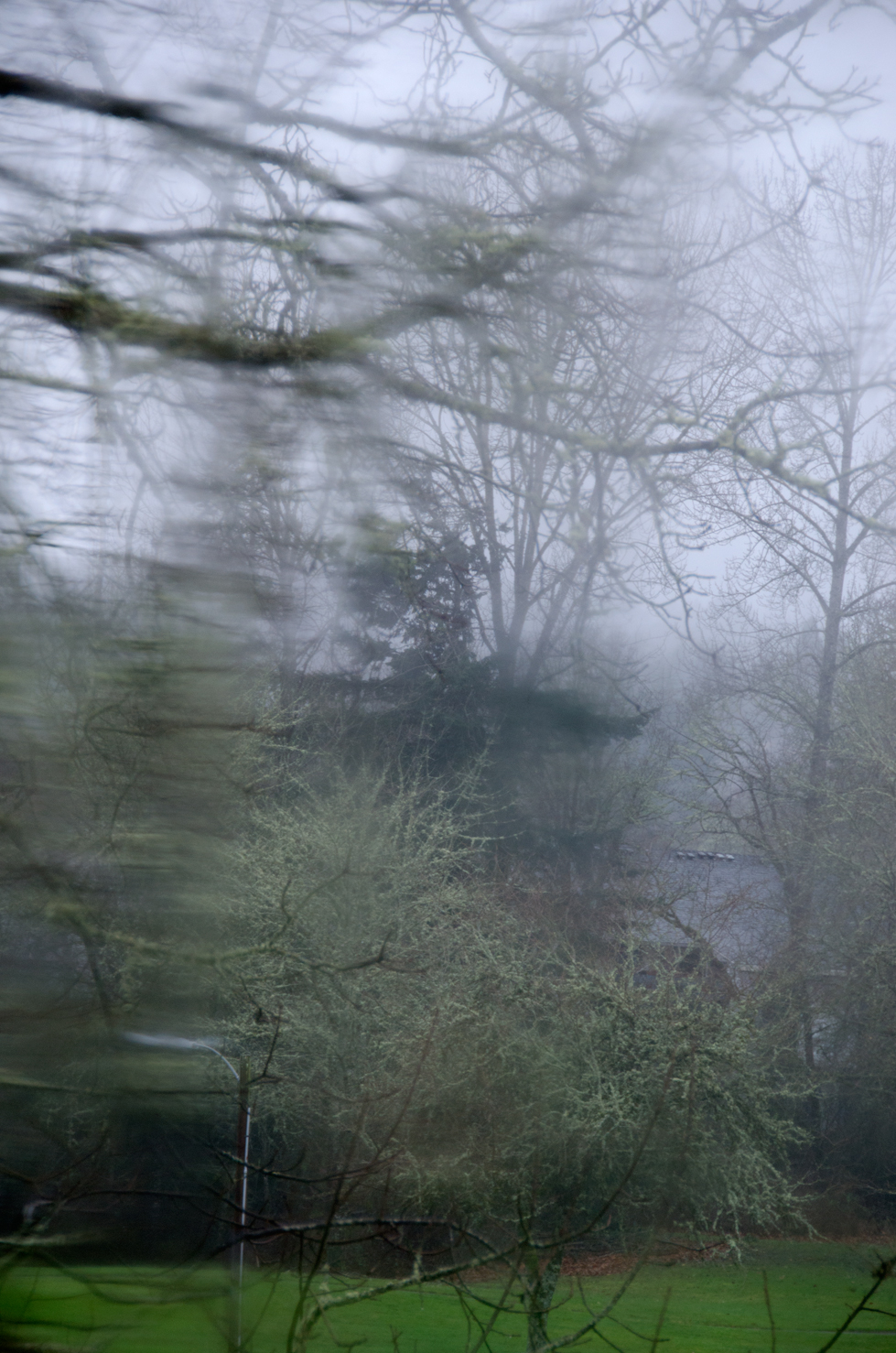 looking at trees through a blurred window
